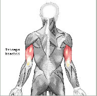 Training des Triceps